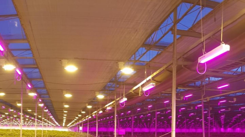 LED in opmars, maar wel in combinatie met HPS