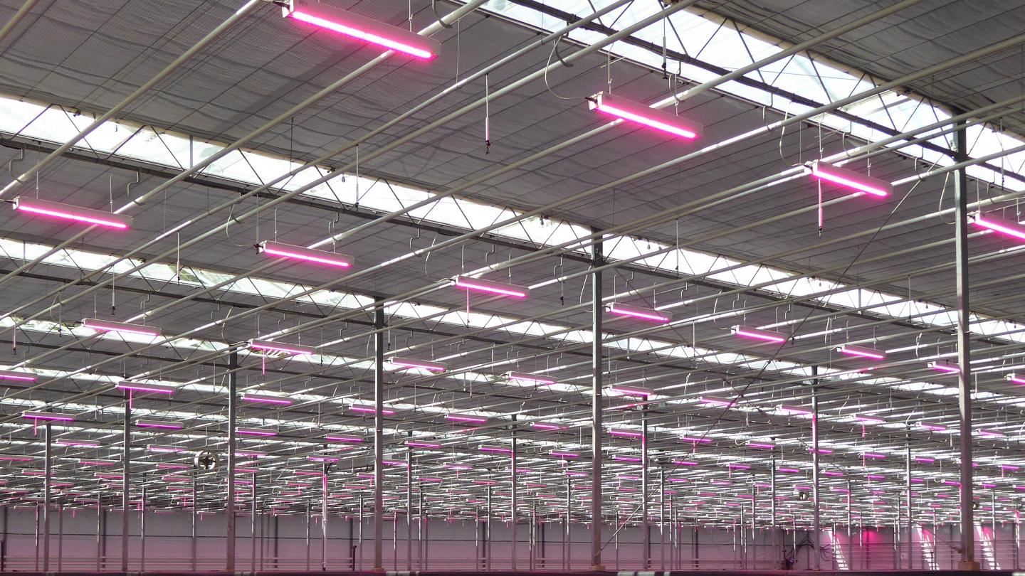 Growers positive about grow light system payback period