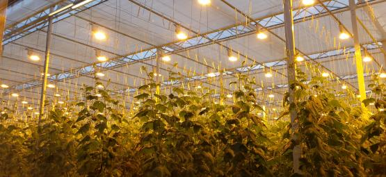 Botanica Russia grow light Hortilux