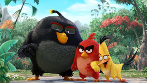 Angry birds movie hd wallpapers