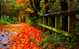 Autumn-2017-Leaves-Wallpaper-HD-1