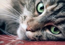 Cat 2019-02-14