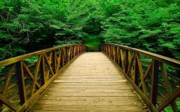 Beautiful-Wooden-Bridge-At-Forest-Wallpaper-HD1