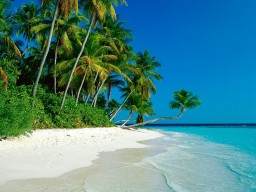 playa-palmeras-1