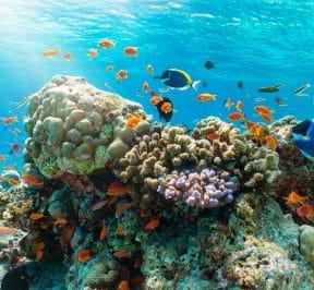 Protéger les océans en nettoyant sa piscine...c'est possible…