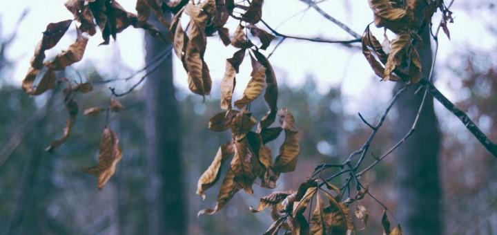 autumn haibun
