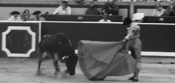 bullfighting in navarra