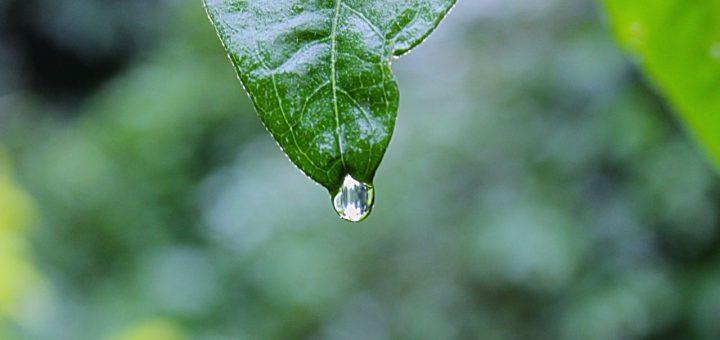 haibun, rain drop