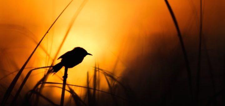 a bird sitting on blade of grass