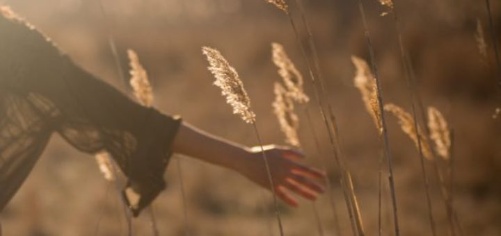 a hand touching the wheat in the sun
