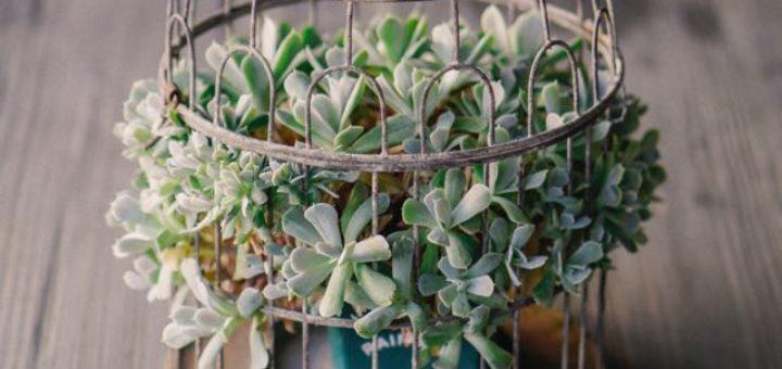 succulents in a retro vase