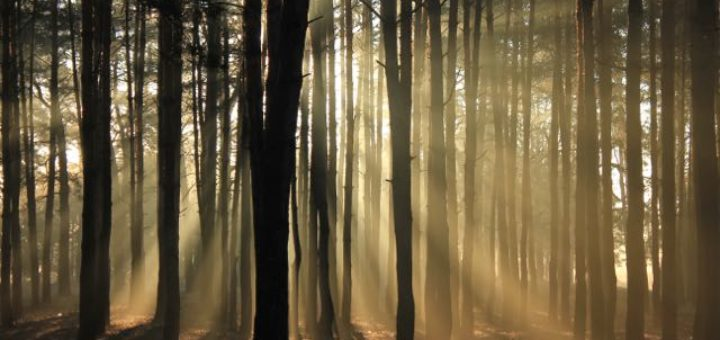 trees in forest with the sun coming through