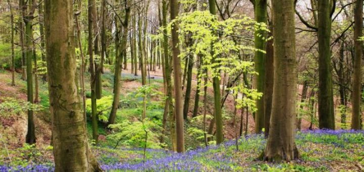 forest with purple flowers in spring