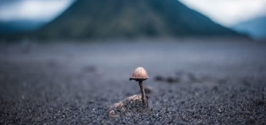 mushroom growing in an empty field