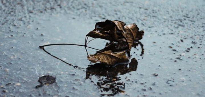 crunchy leaf on wet asphalt