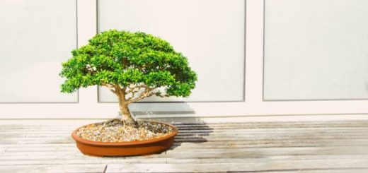 bonsai tree in oval clay pot