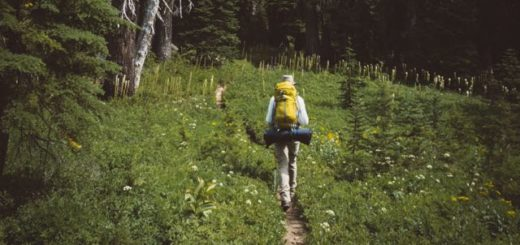 hiker going on path surrounded by green plants