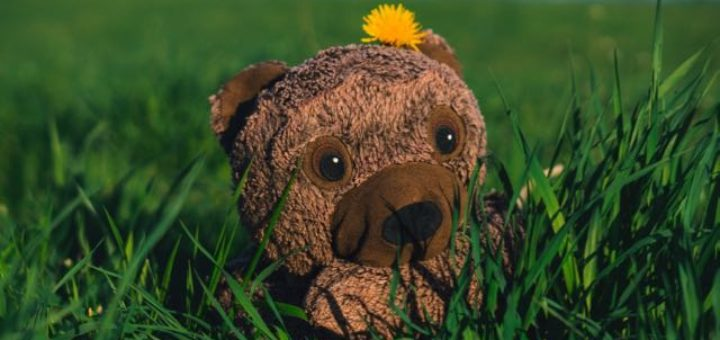 teddy bear in the grass at sunset