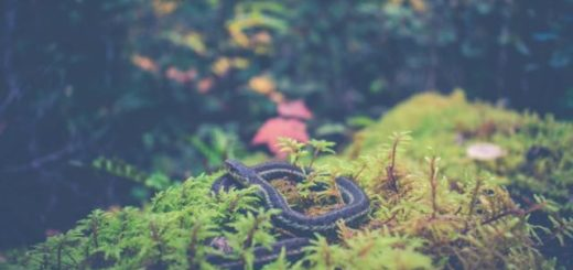 snake rolled up by in moss by hiking trail