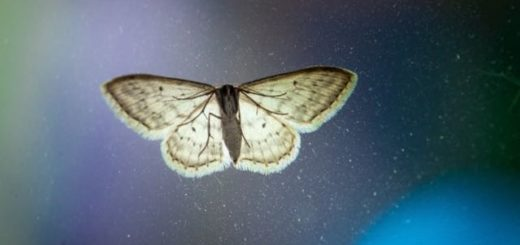 moth on a window with dust and blue light
