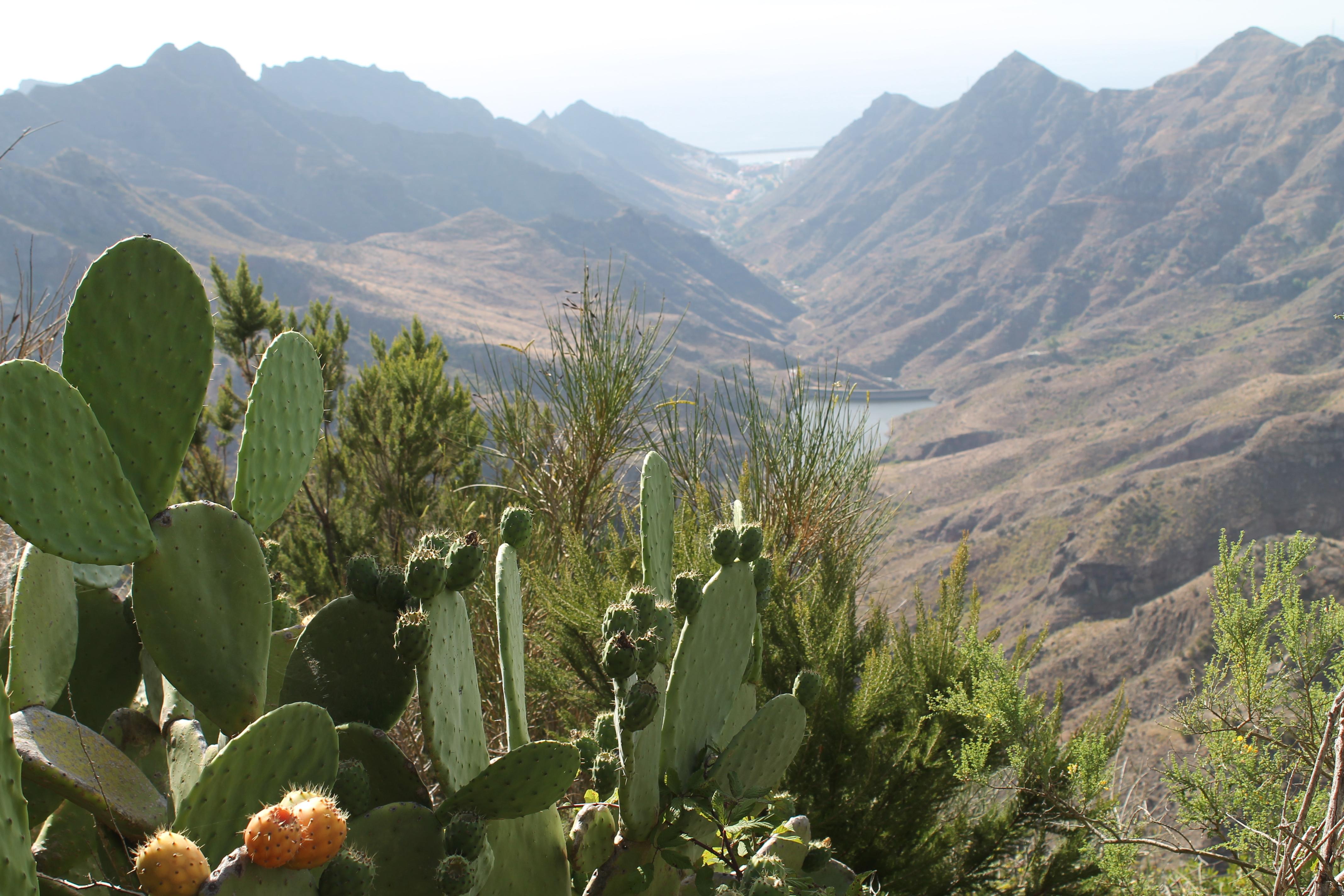 Appartement de vacances Das Geheimnis des Reisenden! (2411453), Candelaria (ES), Ténérife, Iles Canaries, Espagne, image 32