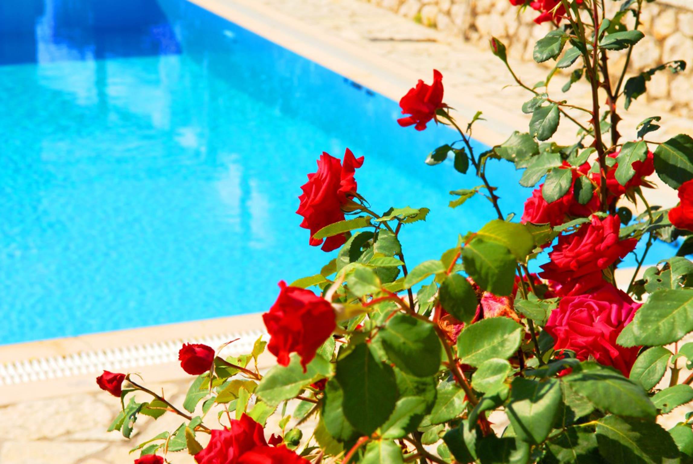 Holiday house Lefkada Villas-villa mit eigenem Pool (2599102), Vafkeri, Lefkada, Ionian Islands, Greece, picture 18
