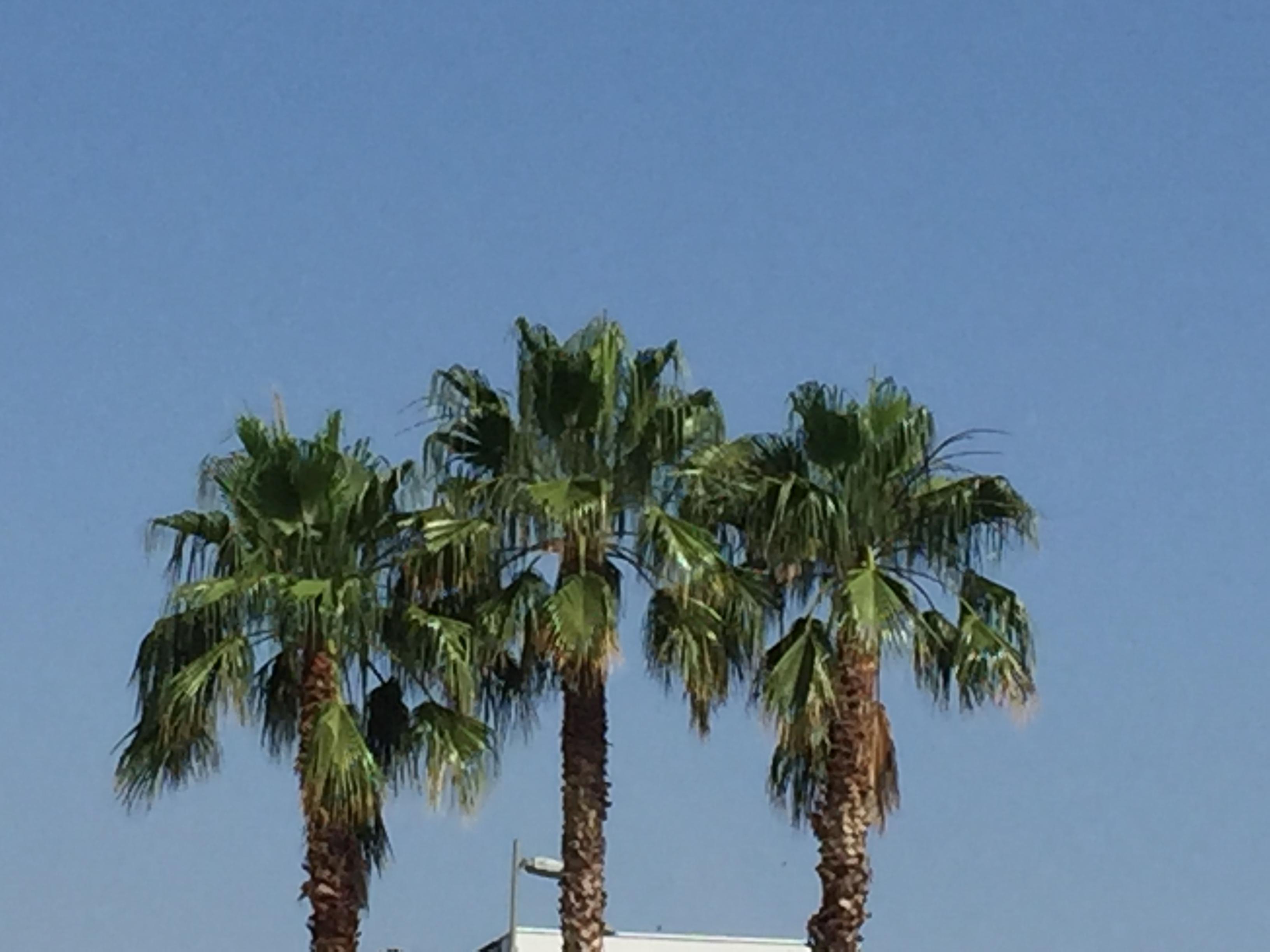 Ferienwohnung nächstgelegenen Bahnhof, zentrale Straßenbahn und Geschäfte (2379462), Montpellier, Mittelmeerküste Hérault, Languedoc-Roussillon, Frankreich, Bild 8