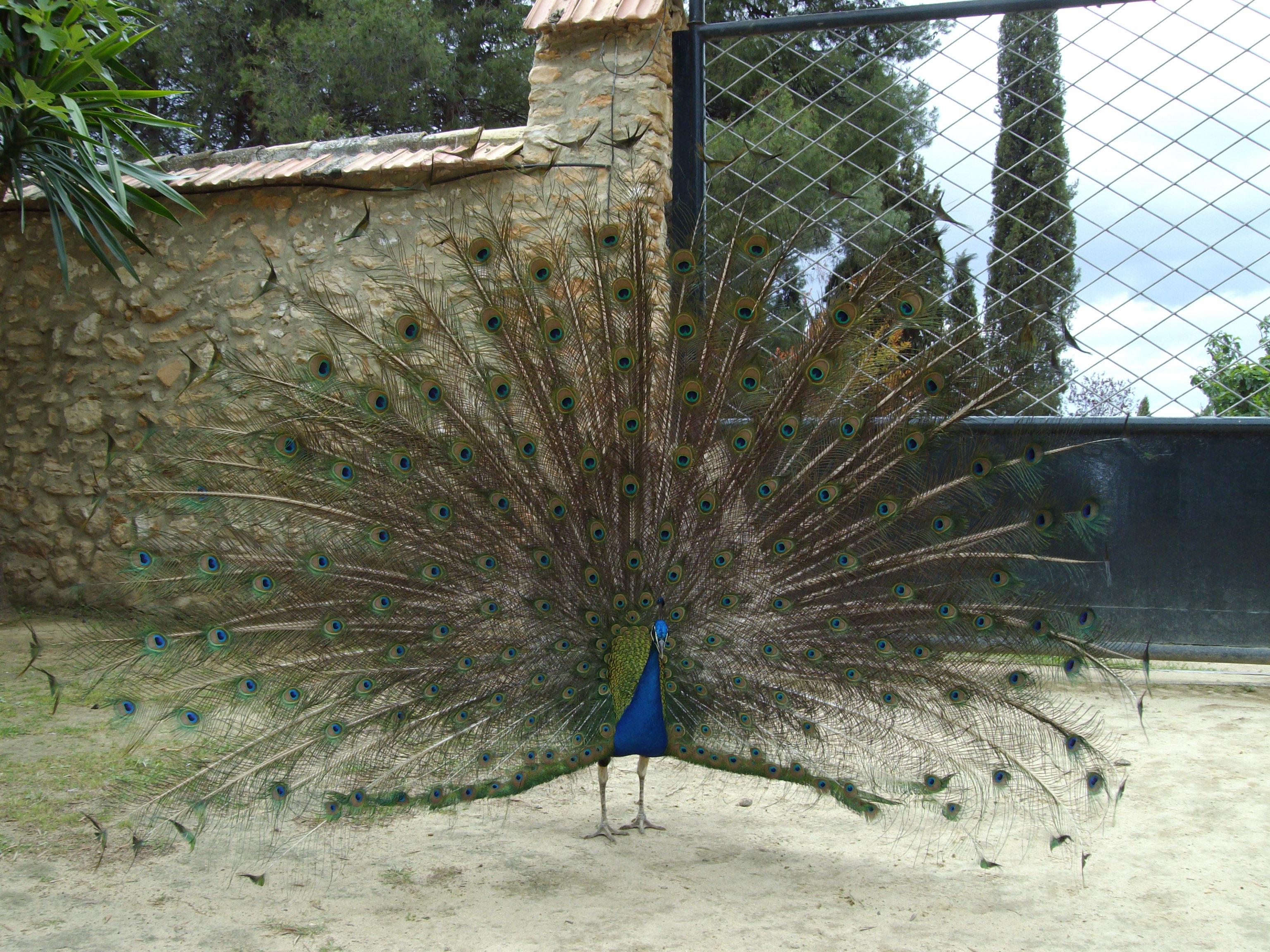 Ferienhaus House No 02 medium (2378813), Antequera, Malaga, Andalusien, Spanien, Bild 29