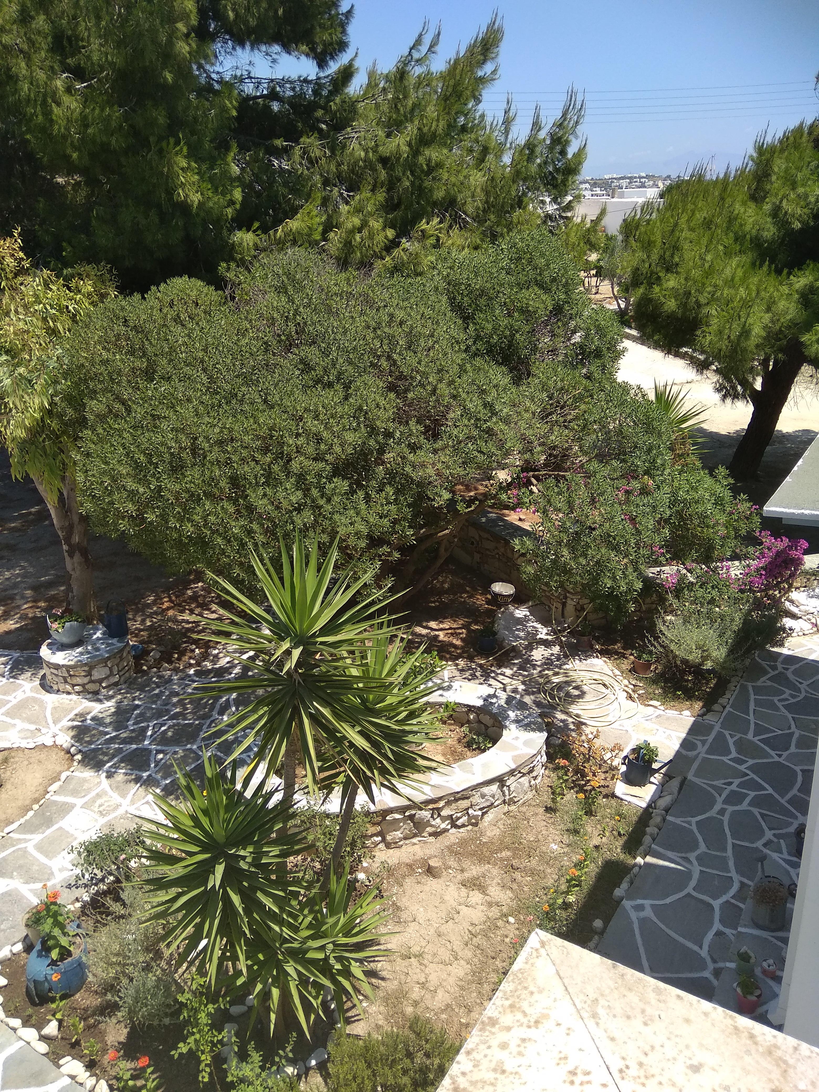 Ferienhaus Kikis Apartments sind private Apartments auf einer kosmopolitischen Insel in der gis (2633934), Paros, Paros, Kykladen, Griechenland, Bild 41