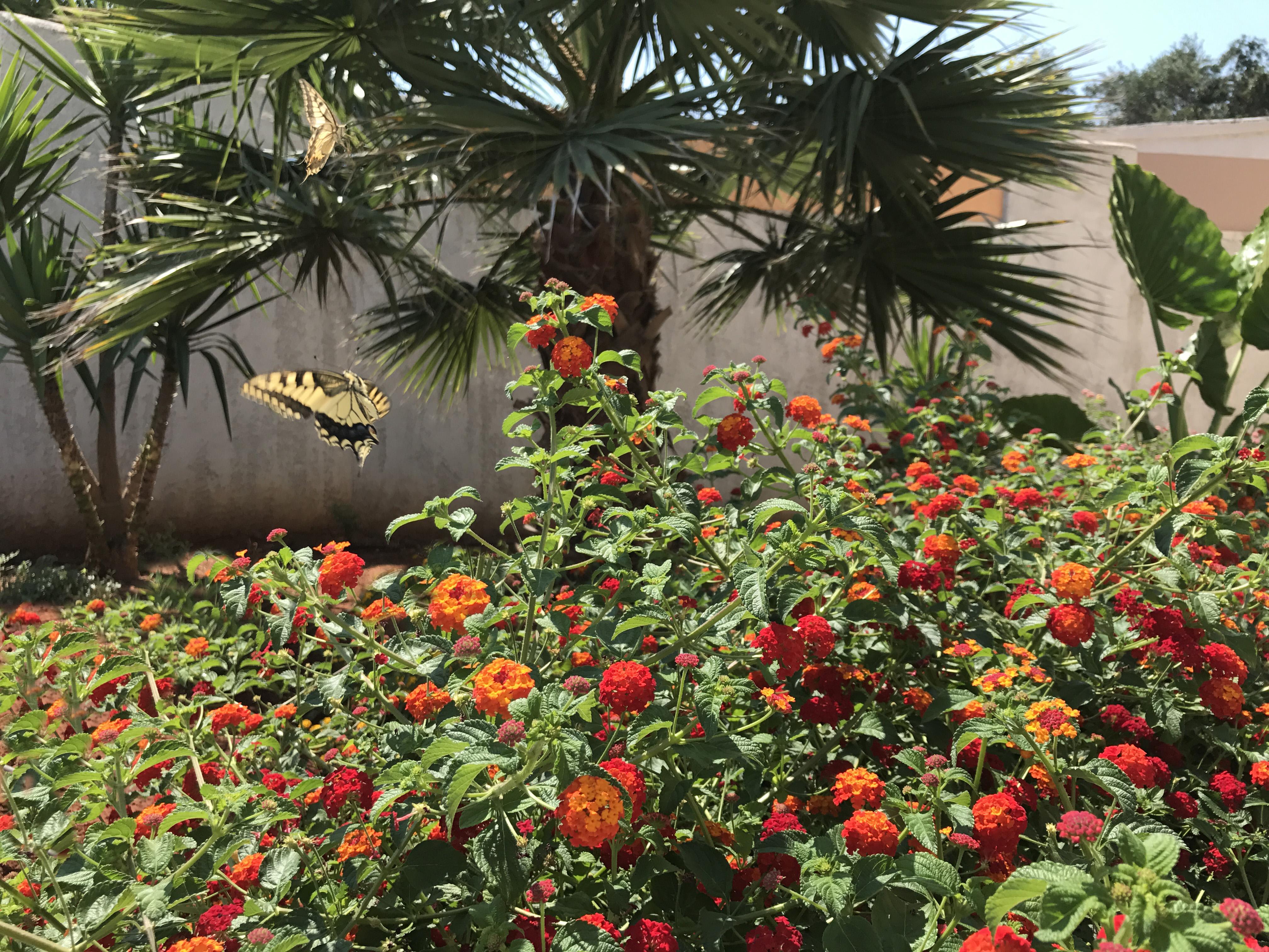 Ferienhaus Villa Katina mit privatem Pool in der Nhe von Almyrida (2125138), Neon Khorion Kriti, Kreta Nordküste, Kreta, Griechenland, Bild 22