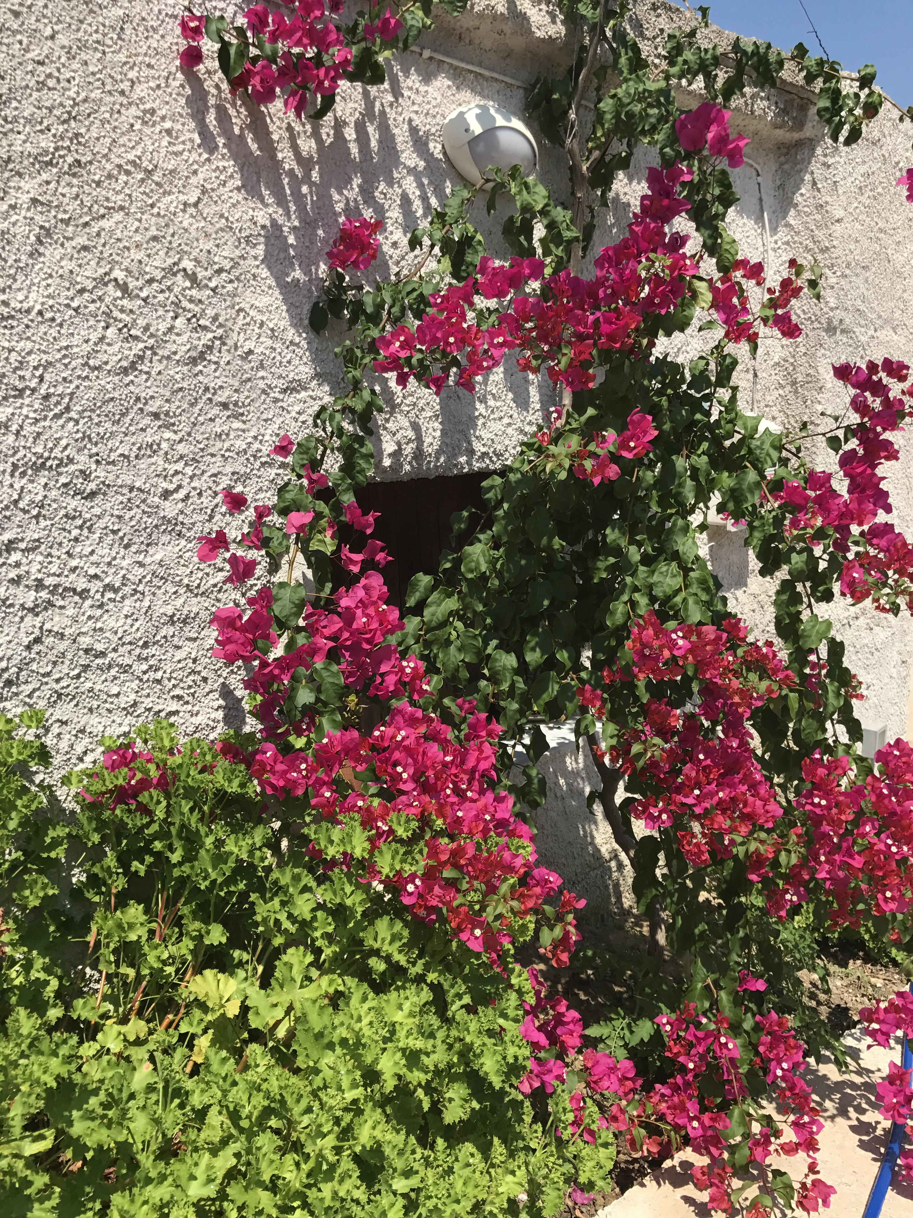 Ferienhaus Villa Katina mit privatem Pool in der Nhe von Almyrida (2125138), Neon Khorion Kriti, Kreta Nordküste, Kreta, Griechenland, Bild 24