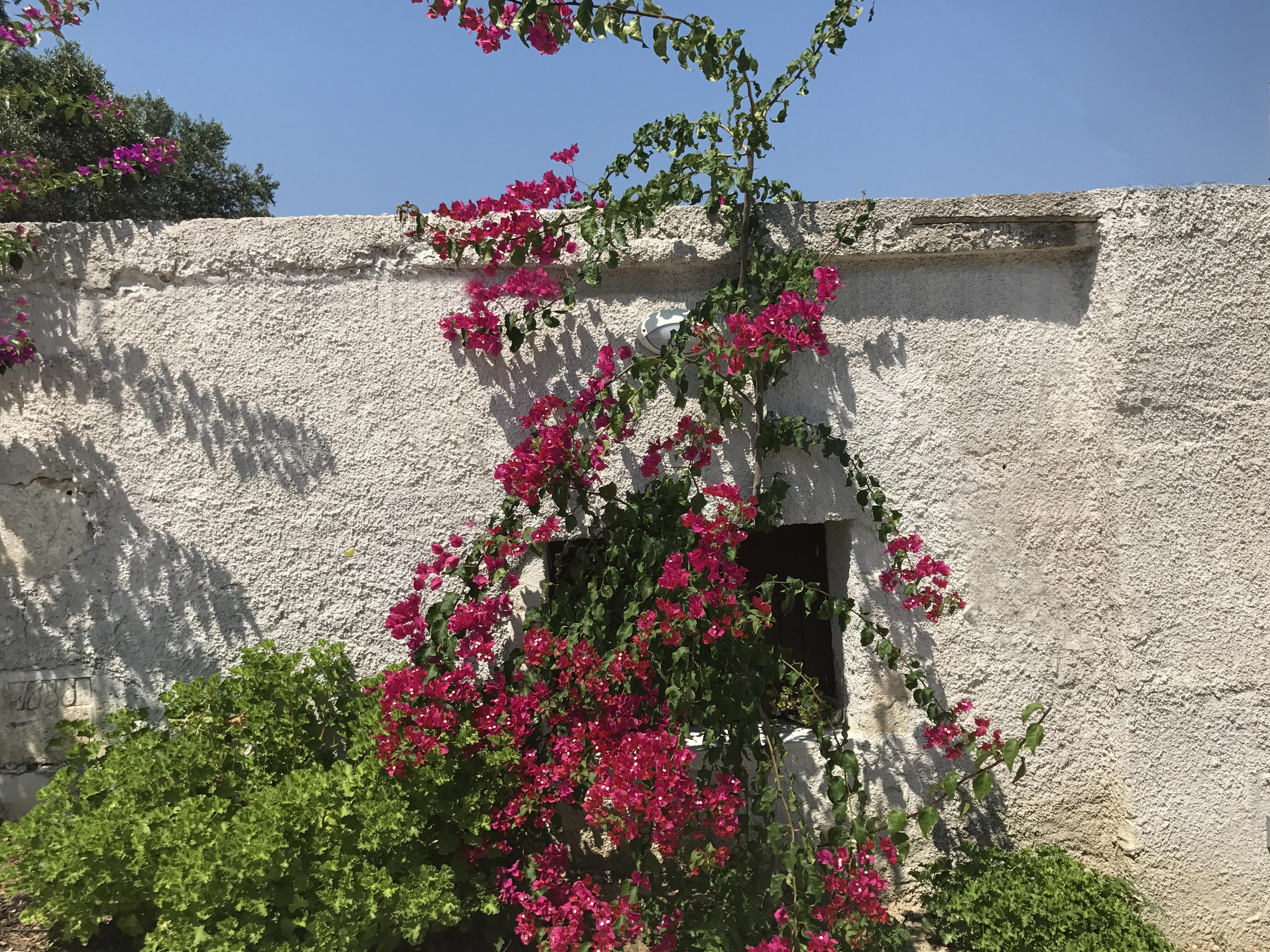 Ferienhaus Villa Mimis mit privatem Pool nr Almyrida & Kalyves (2123676), Neon Khorion Kriti, Kreta Nordküste, Kreta, Griechenland, Bild 25
