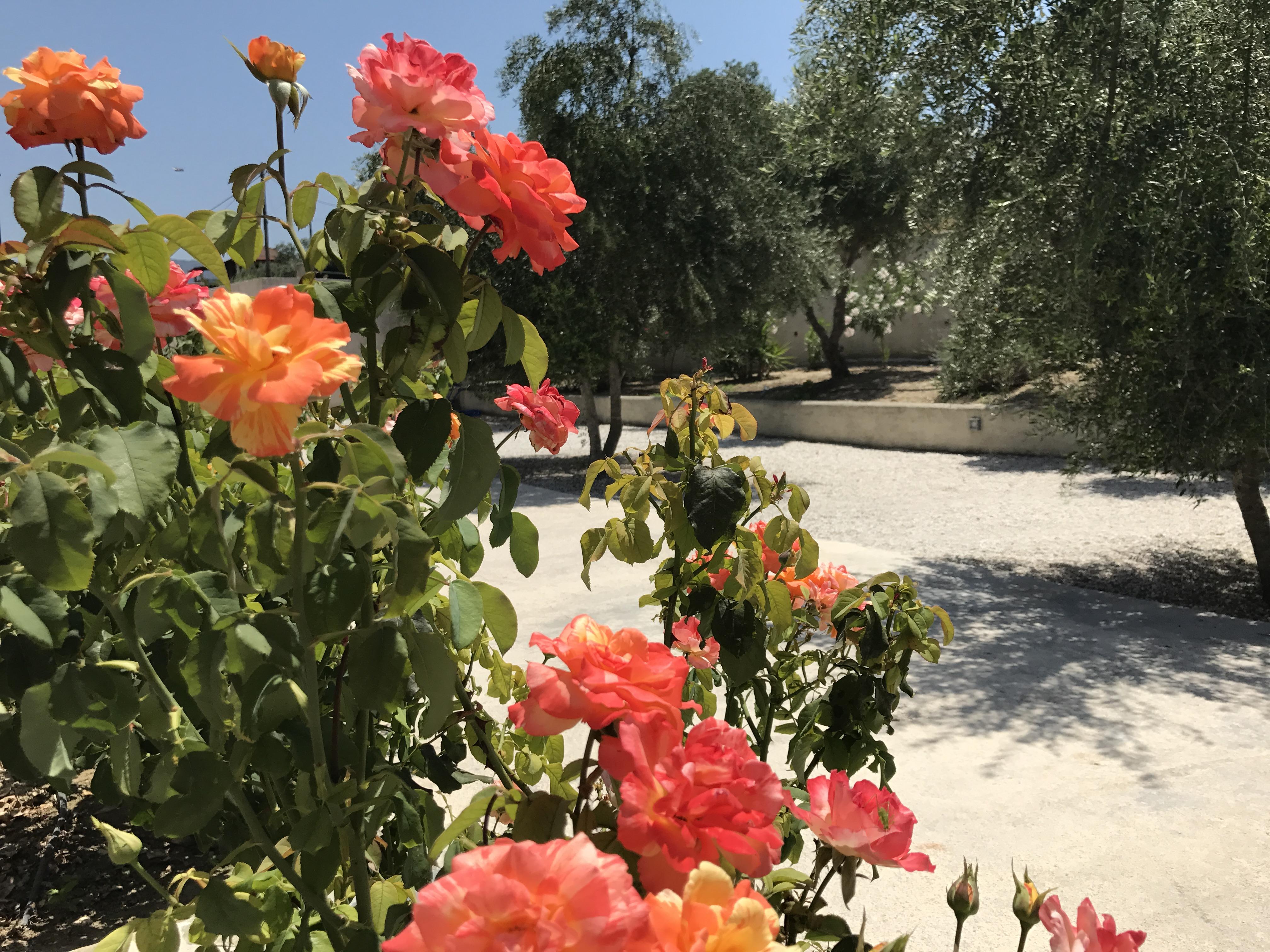 Ferienhaus Villa Mimis mit privatem Pool nr Almyrida & Kalyves (2123676), Neon Khorion Kriti, Kreta Nordküste, Kreta, Griechenland, Bild 22