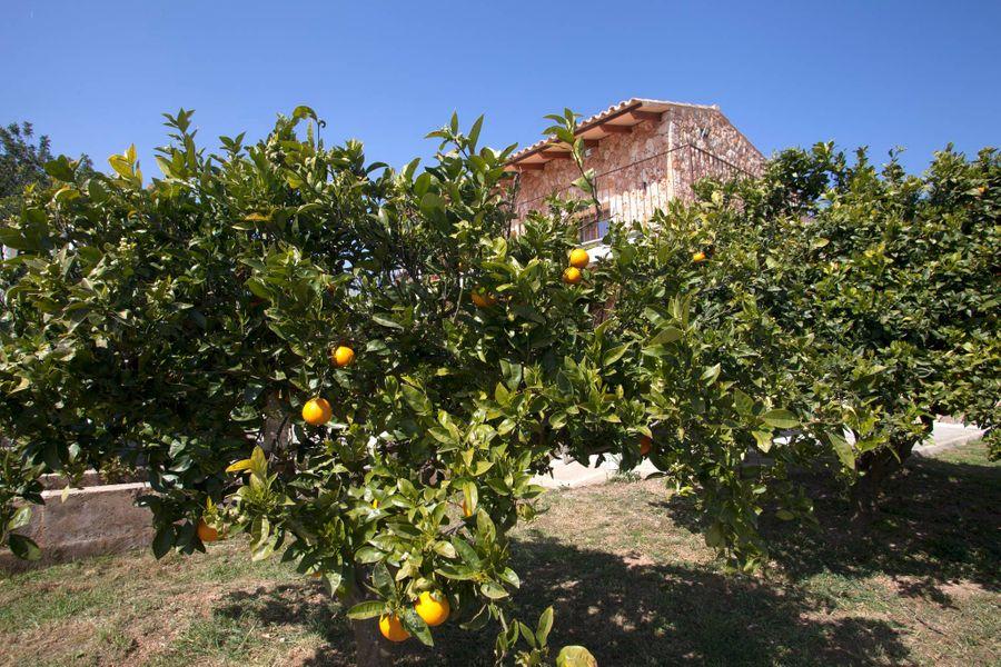 Lovely Family & Small Groups Villa Close To Sa Rapita Beach