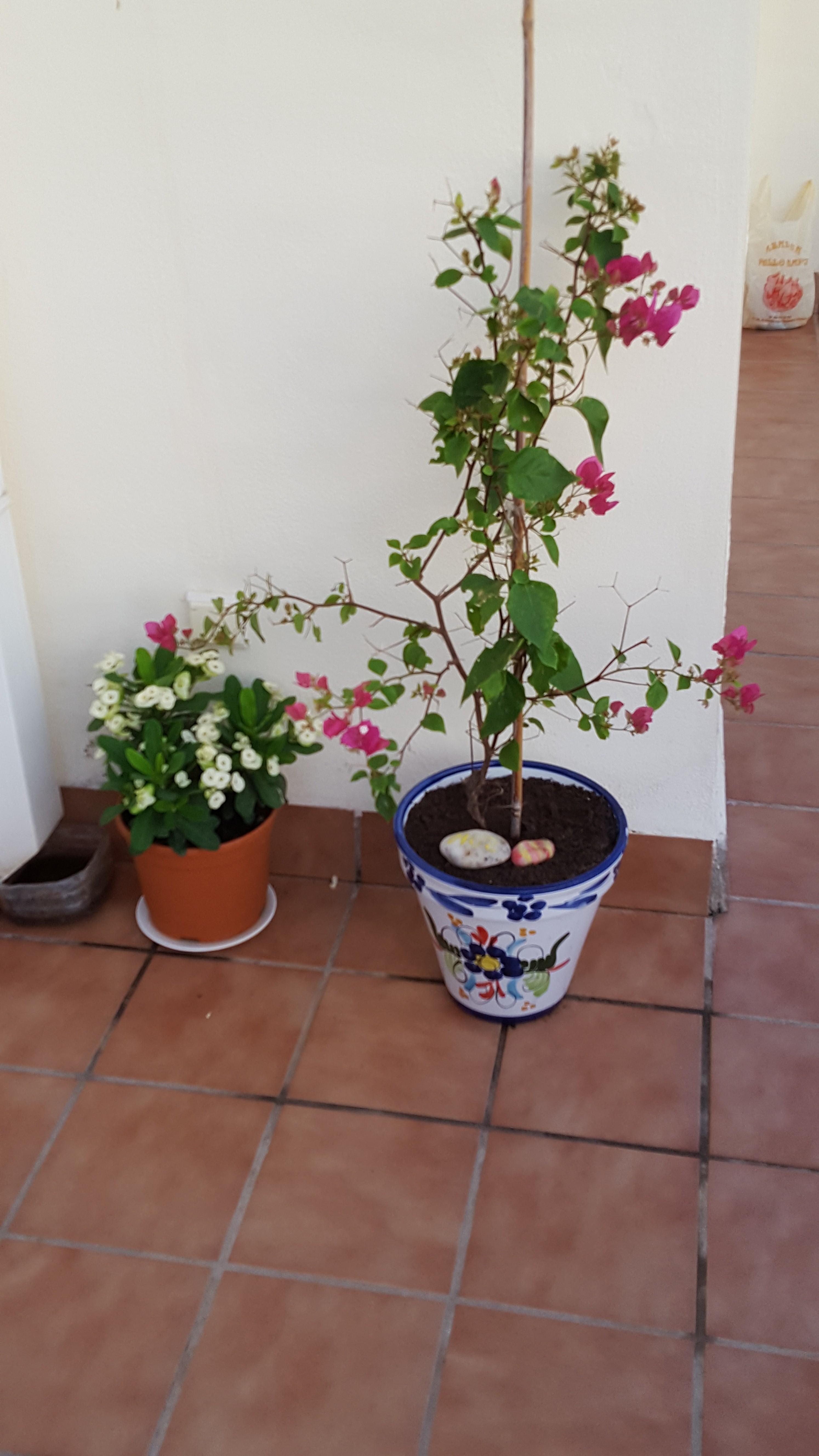 Ferienwohnung 3 Schlafzimmer Wohnung zu vermieten in Mojcar, Spanien (2388895), Mojacar, Costa de Almeria, Andalusien, Spanien, Bild 24