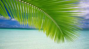 Indcen Resor erbjuder både färdiga reseförslag till Aruba och möjlighet att själv skräddarsy resan enligt Dina önskemål.