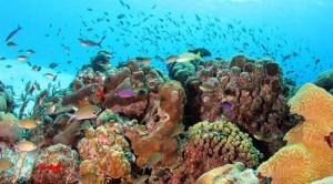Lions Diving Fishes Curacao | Skräddarsydda Indcen Resor