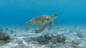 Lions Diving Turtle Curacao | Skräddarsydda Indcen Resor