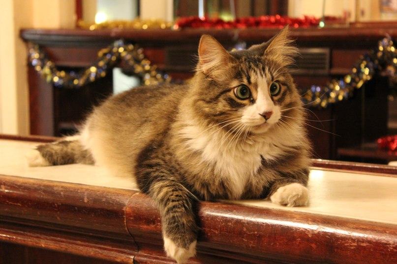 Четвероногий хранитель петербургского джаза - кот Митя
