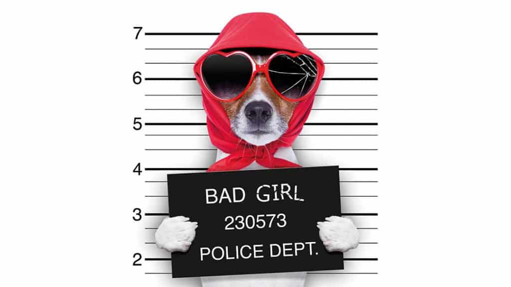 copyright en boetes - bad girl