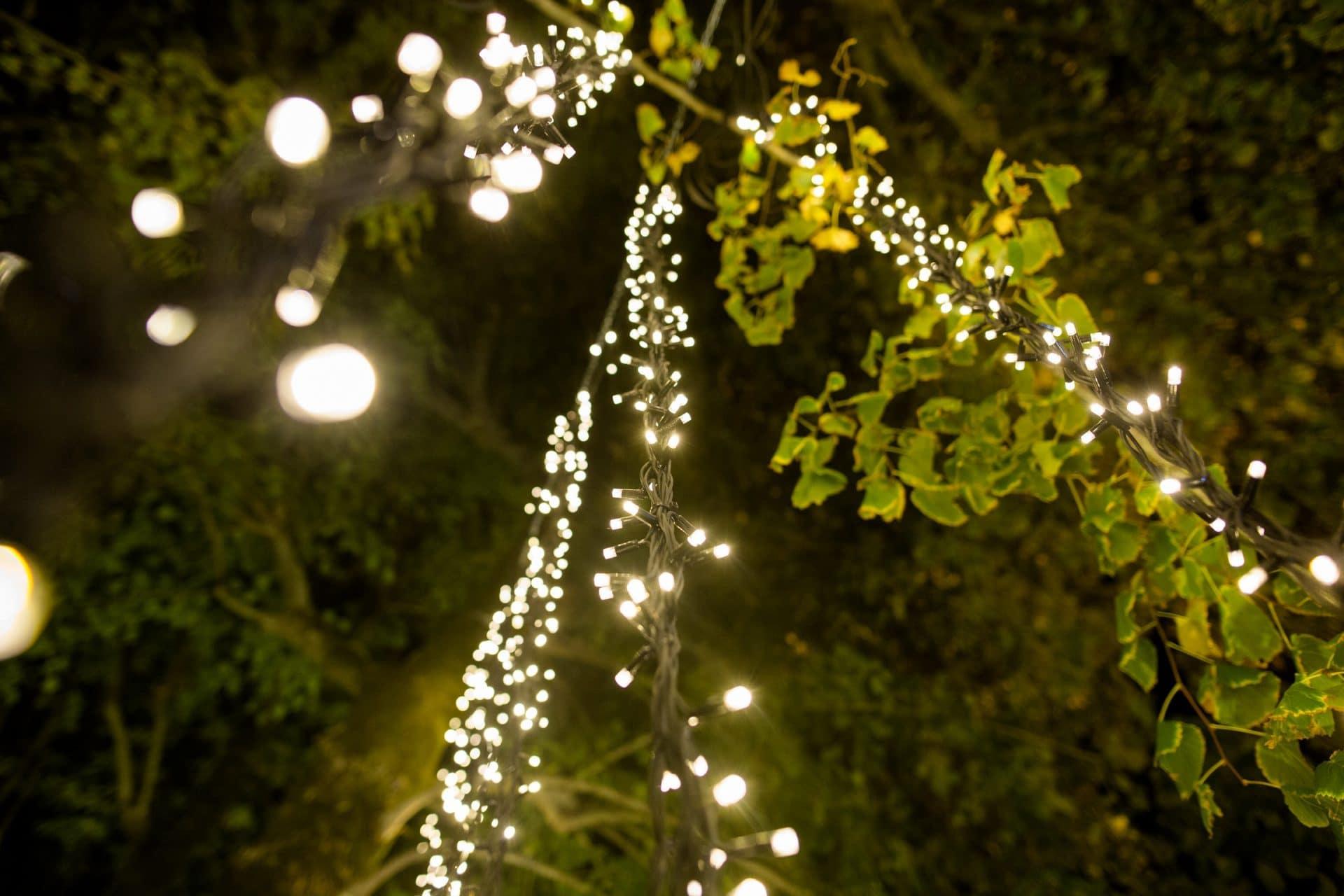fairy lights kaleydo entertainment
