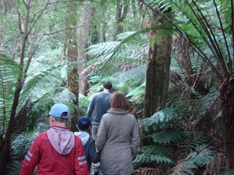 Rain forests and Apollo Bay