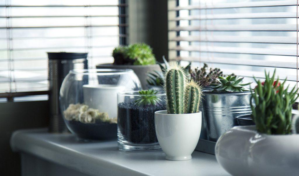 Le cactus est un élément indispensable de la déco mexicaine!