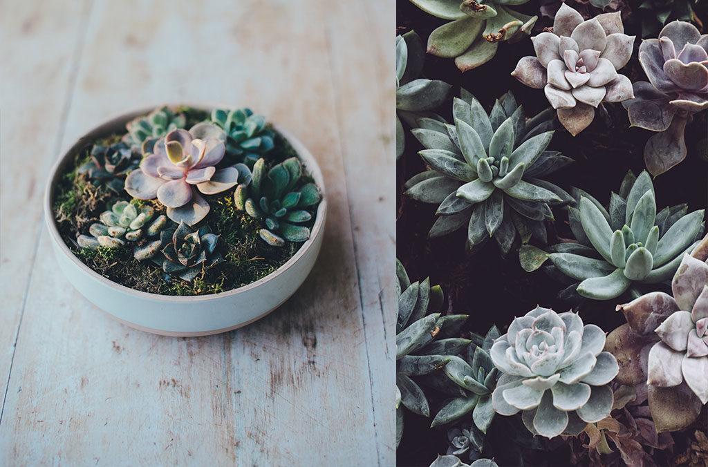 5 conseils de maria pour décorer avec des plantes