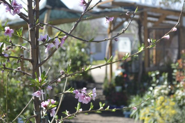 עצי פרי ונוי – שיחים ומטפסים