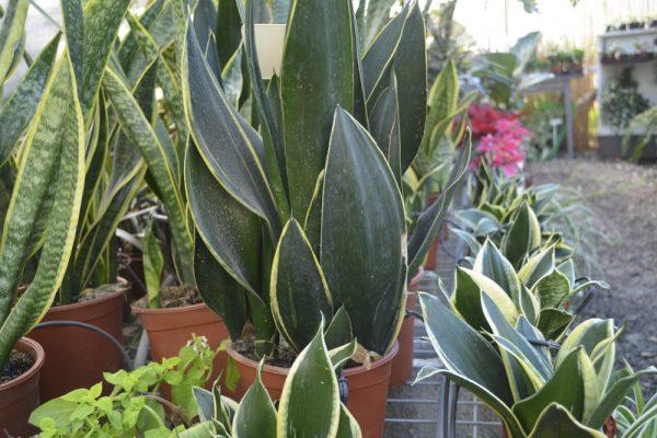 צמחי בית ומרפסת