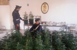 carabinieri-marijuana5-2015a