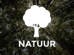Workshops met natuur