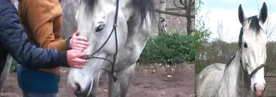 paardenfluisteren www.loekie.nu