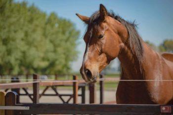 paarden Loekie
